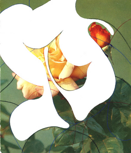 Roses II (2008)